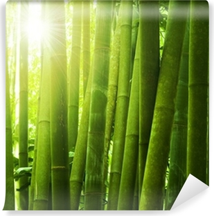 Bamboo forest. Washable Wall Mural
