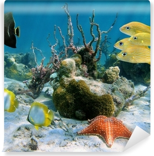 Fishes and sea star Washable Wall Mural