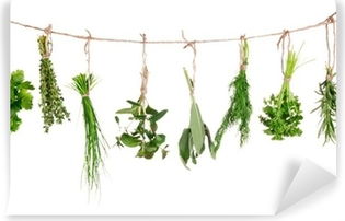 Fresh herbs hanging isolated on white background Washable Wall Mural