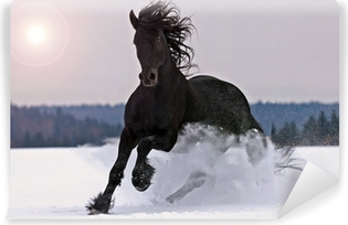 Frisian horse on snow Washable Wall Mural