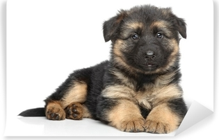 German shepherd puppy on white background Washable Wall Mural
