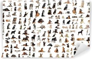 groupe de chiens de race Washable Wall Mural