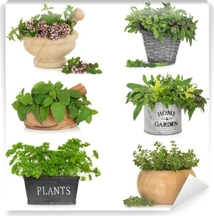 Herbs in Containers Washable Wall Mural
