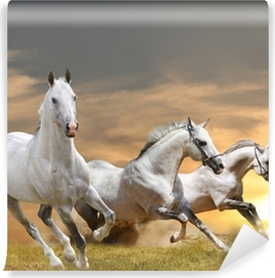 horses in sunset Washable Wall Mural