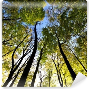 Looking up to the sky in the forest Washable Wall Mural