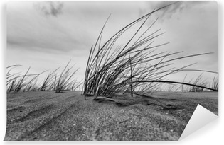 Marram Grass Close-up In Black And White Washable Wall Mural