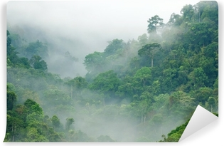 Morning fog in the rainforest Washable Wall Mural