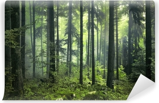 Mysterious dark forest Washable Wall Mural