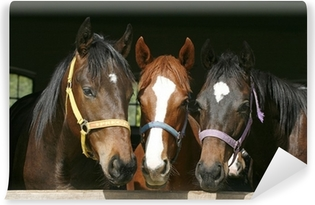 Nice thoroughbred foals in stable. Washable Wall Mural