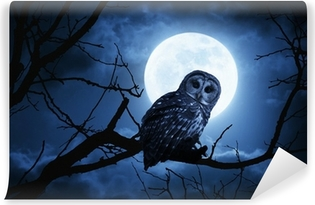 Owl Watches Intently Illuminated By Full Moon On Halloween Night Washable Wall Mural