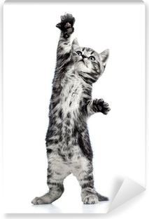 playful kitten cat isolated on white Washable Wall Mural