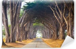 Point Reyes Cyress Tree Tunnel Washable Wall Mural