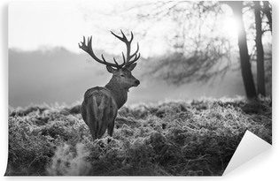 Red deer in Richmond park Washable Wall Mural