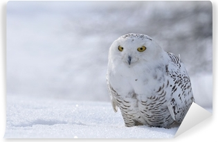 snowy owl sitting on the snow Washable Wall Mural