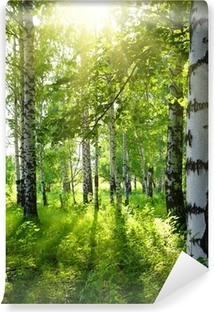 summer birch woods with sun Washable Wall Mural