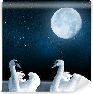 Swans on the lake in the night sky. Washable Wall Mural