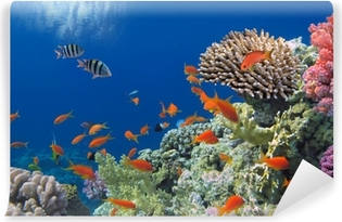 Tropical Fish on Coral Reef in the Red Sea Washable Wall Mural