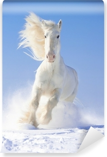 White horse stallion runs gallop in front focus Washable Wall Mural
