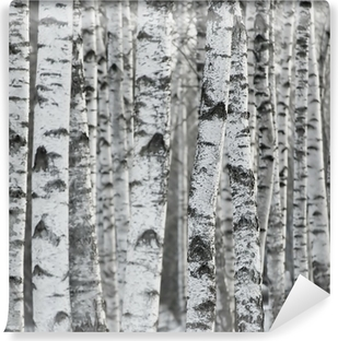 Winter Birch Tree Forest Background Washable Wall Mural