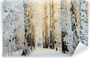 winter birch woods in morning light Washable Wall Mural