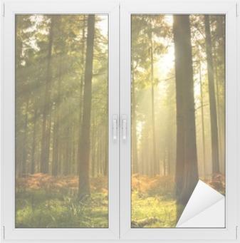 Beautiful forest Window & Glass Sticker