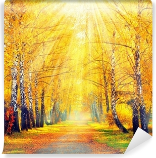 Yıkanabilir Duvar Resmi Sonbahar Parkı. güneş ışınları Sonbahar Ağaçları ve Yapraklar