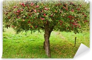Zelfklevend Fotobehang Appelbomen boomgaard