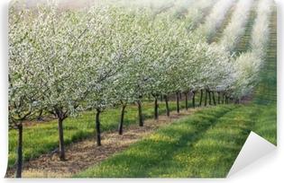 Zelfklevend Fotobehang Bloeiende boomgaard