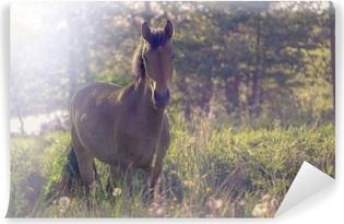 Zelfklevend Fotobehang Bruin paard in het midden van een weide in het gras, de stralen van de zon, afgezwakt.