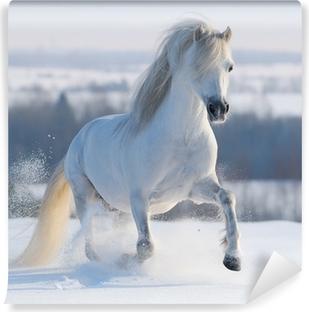 Zelfklevend Fotobehang Galopperend wit paard