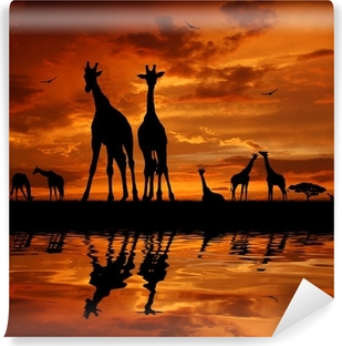 Zelfklevend Fotobehang Kudde giraffen in de zonsondergang