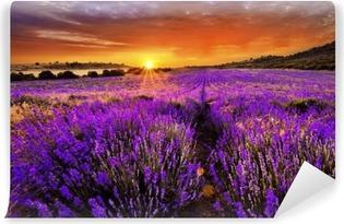 Zelfklevend Fotobehang Lavendelvelden