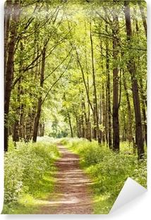 Zelfklevend Fotobehang Pad in een zonnige zomer bos