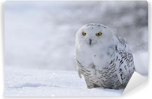 Zelfklevend Fotobehang Sneeuwuil zitten in de sneeuw
