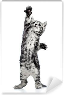 Zelfklevend Fotobehang Speelse kitten kat geïsoleerd op wit