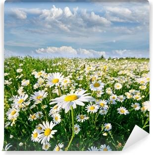 Zelfklevend Fotobehang Springtime: gebied van daisy bloemen met blauwe lucht en de wolken
