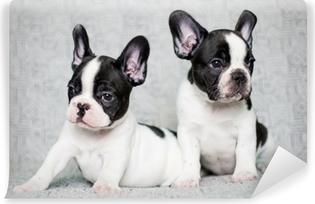 Zelfklevend Fotobehang Twee Franse bulldog puppies