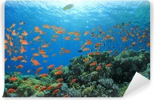 Zelfklevend Fotobehang Vis en Coral Reef onderwater