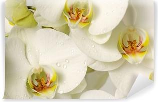 Zelfklevend Fotobehang Witte orchideeën