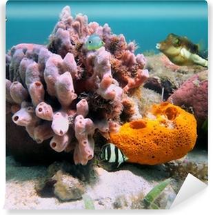 Zelfklevend Fotobehang Zee sponzen en tropische vissen
