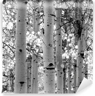 Zelfklevend Fotobehang Zwart-wit beeld van ratelpopulier bomen