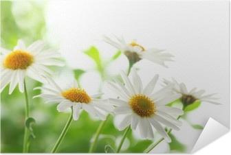 Zelfklevende Poster Close-up van witte margriet bloemen