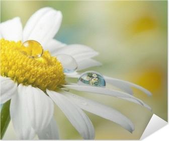 Zelfklevende Poster Daisy met daling met gespiegelde effect