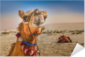 Zelfklevende Poster Detail van het hoofd van de kameel met grappige expresion