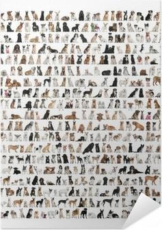 Zelfklevende Poster Grote groep van hondenrassen in de voorkant van een witte achtergrond