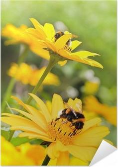 Zelfklevende Poster Hommels op zonnebloemen in de zomer tuin