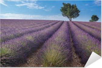 Zelfklevende Poster Lavendel veld in Valensole plateau, Provence (Frankrijk)