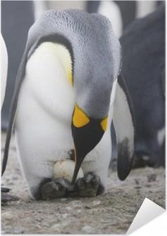 Zelfklevende Poster Pinguïn met ei