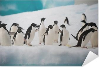 Zelfklevende Poster Pinguïns op de sneeuw