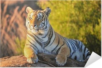 Zelfklevende Poster Portret van een tijger